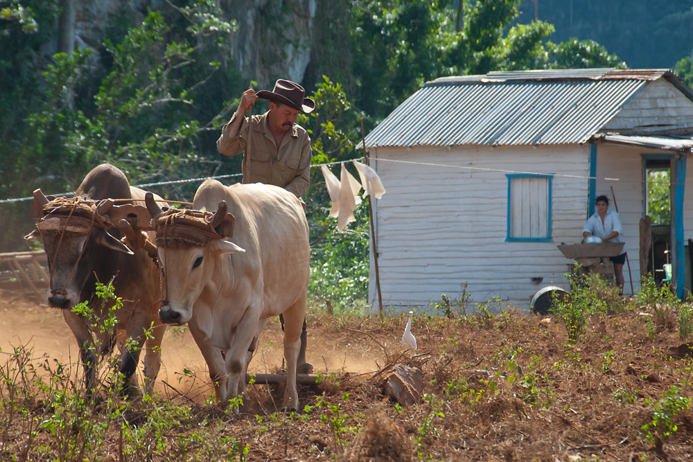 Plowing and dish washing - Role perception in Cuba