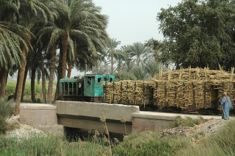 Narrow track train transporting sugar cane